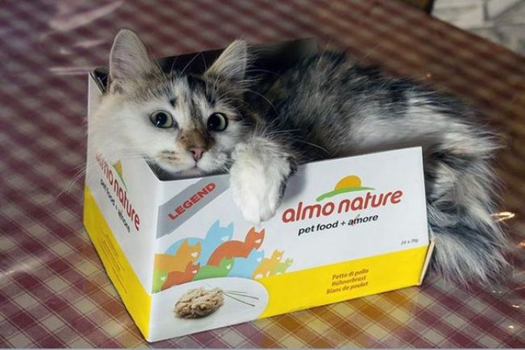 Кот в коробке от корма Альмо Натюр