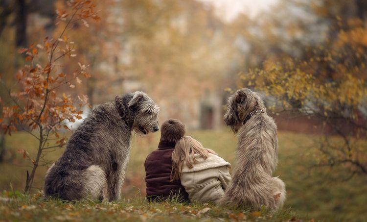 Прогулка с парке с собаками