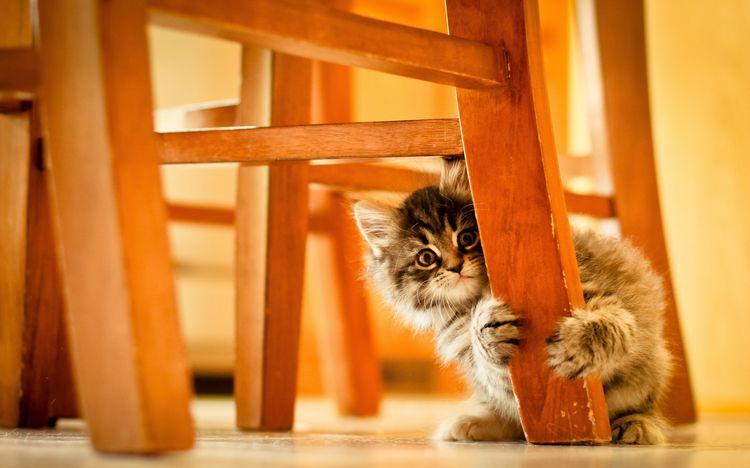 Котенок прячется за ножкой стула