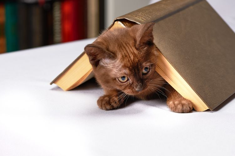 Котенок под книгой