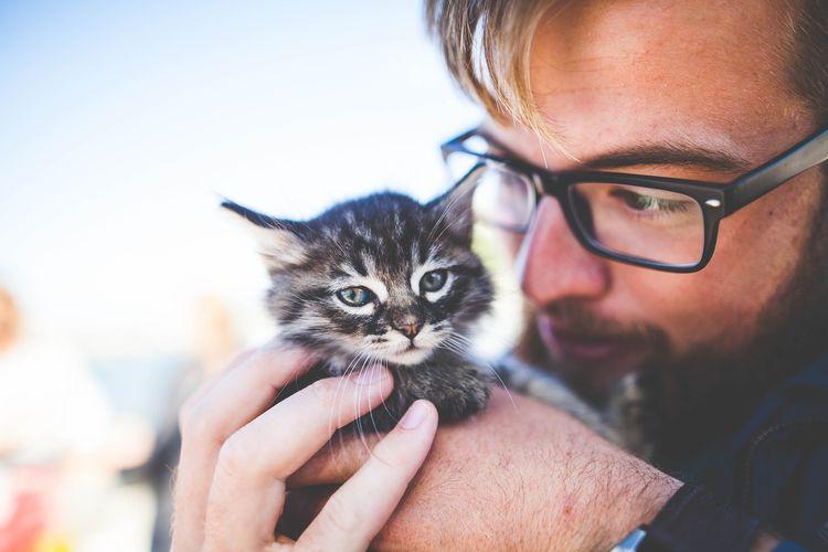 Котенок и его хозяин