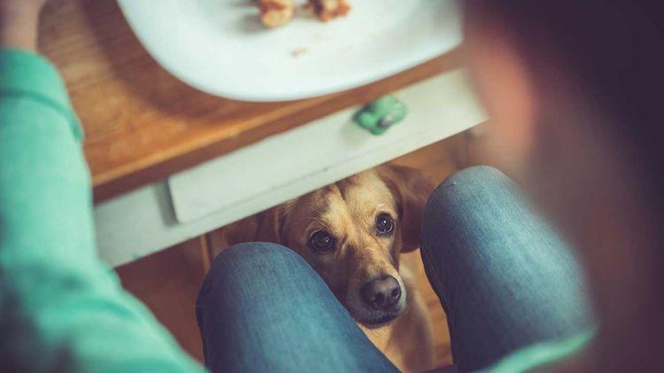 Собака просит есть