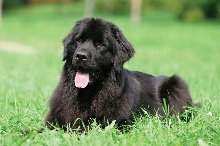 Крупный щенок