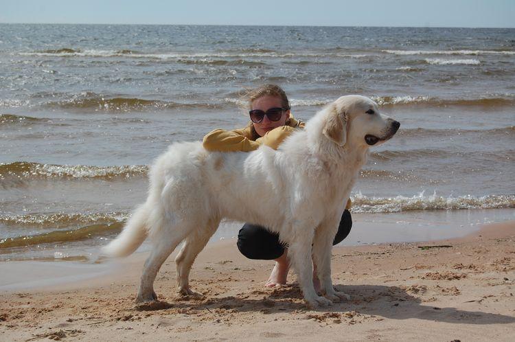 Высокая собака
