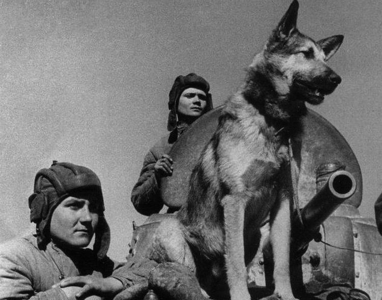 Собаки-диверсанты во времена ВОВ