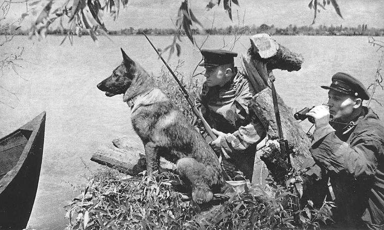 Собака-сапер во времена ВОВ