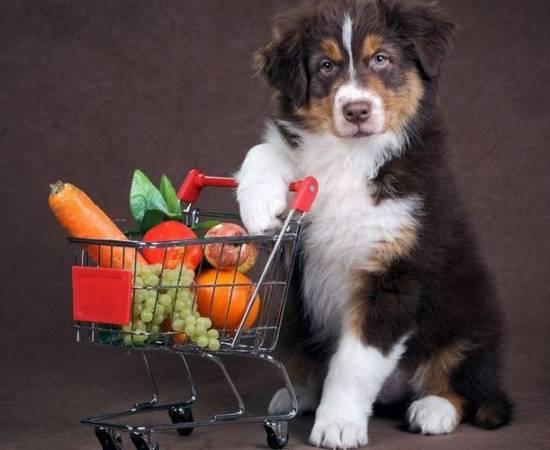 Собака с овощами и фруктами