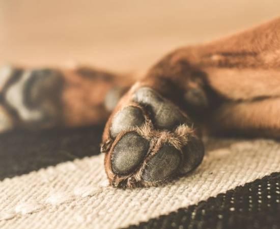 Лапы собаки после лапомойки