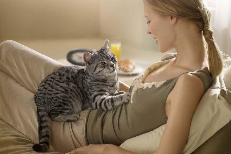 Кошка сидит на животе хозяйки