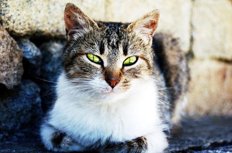Кошка сидит на улице