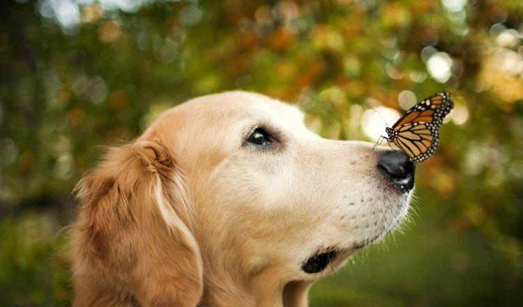 Собака на природе