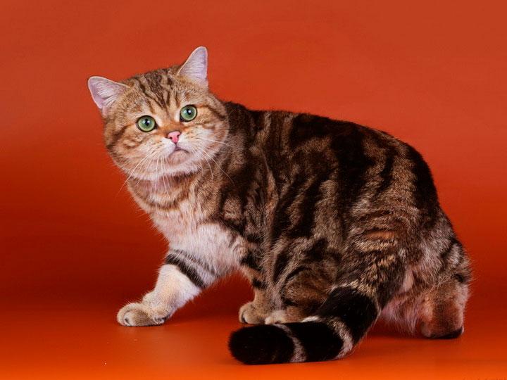пальто-кафтан, отороченное картинки мраморная кошка фото свободное съёмок время
