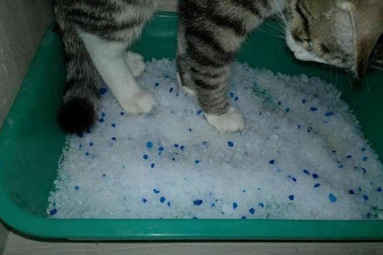 Силикагелевый наполнитель для лотка кошки