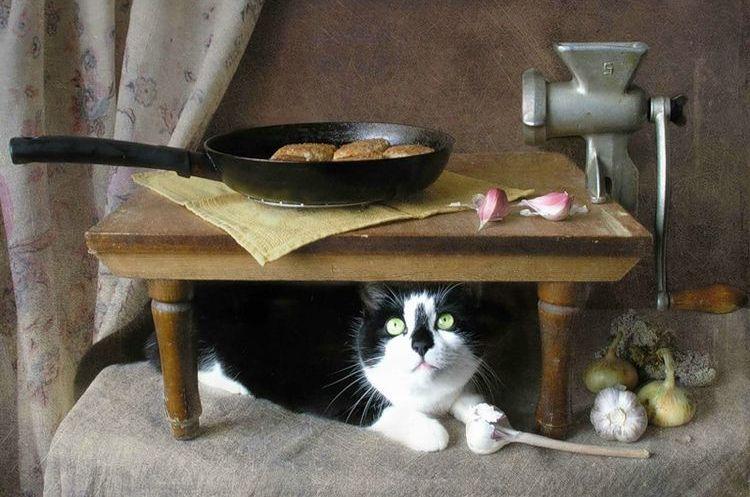 Кот и котлета