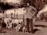 Алопекис в 60-хх на ферме