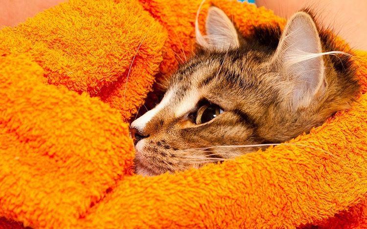 Кот в полотенце