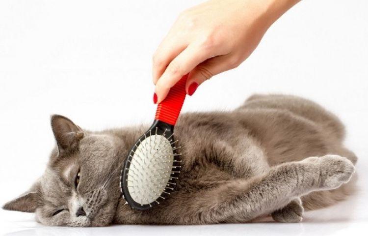 Рассчесывание кота