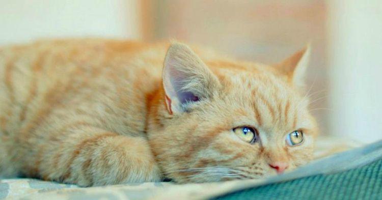 Канефрон коту при мочекаменной болезни
