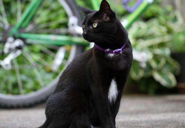 Ошейник для кошек от блох и клещей: какой лучше, как действует, как одеть и отзывы