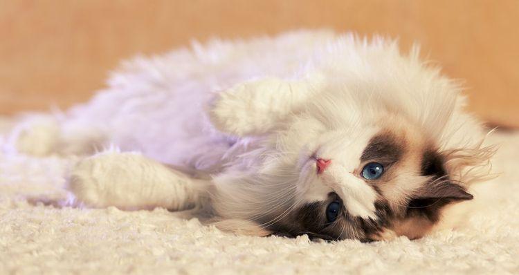 Папаверин для кошек дозировка в таблетках