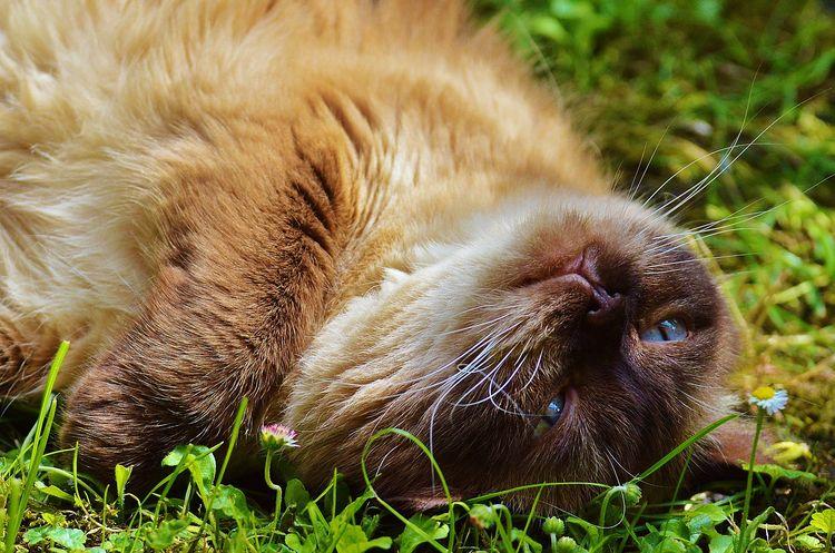Кот нежится на солнце