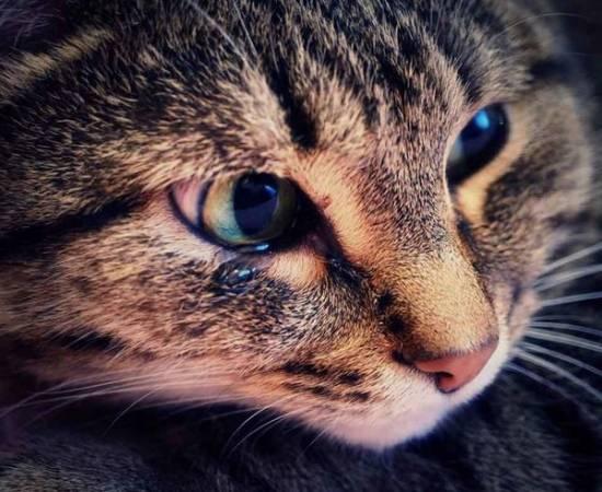 Выделения из глаз у кошки