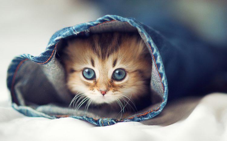 Котенок в штанине
