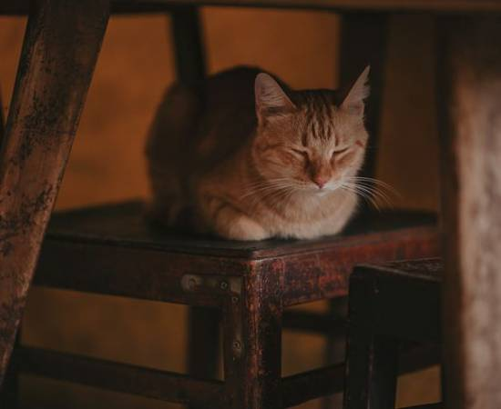 Коронавирусный гастроентерит у кошек