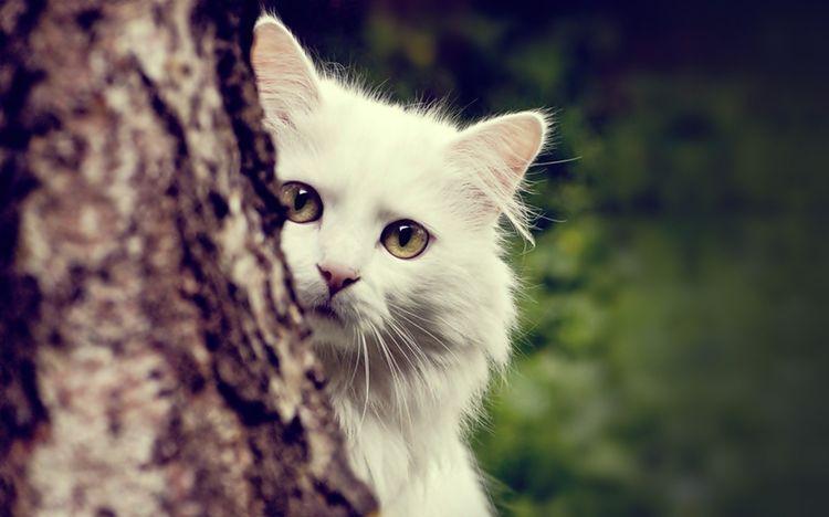 Кошки уходят из дома