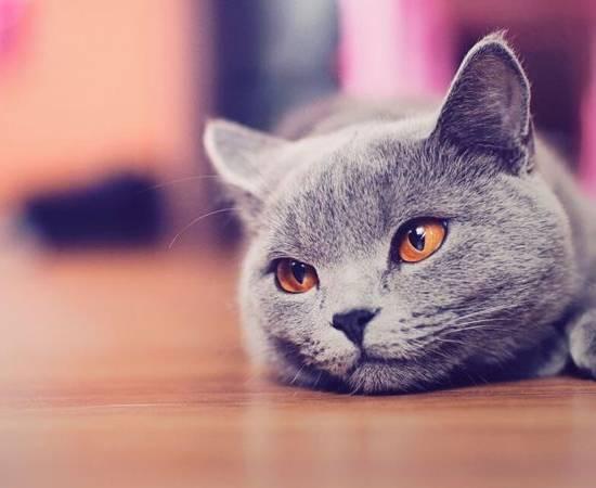 Почему у кота лезет шерсть
