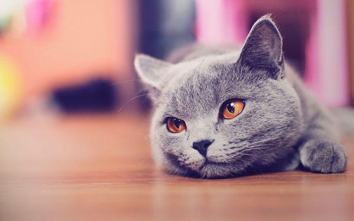 Шерсть у кошки лезет круглый год почему