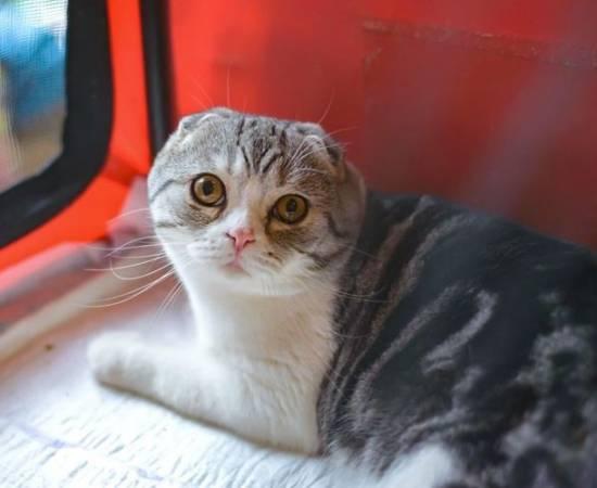 Выделения у кошки