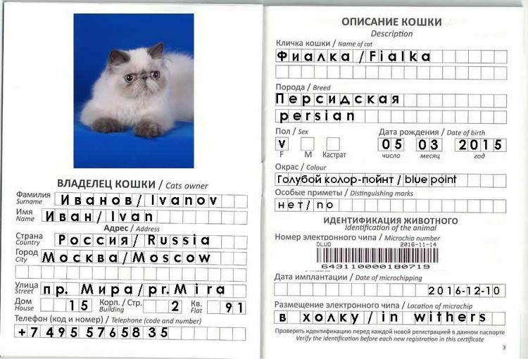 Образец заполнения ветпаспорта для кошки