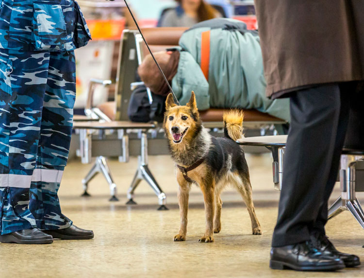 Собака Клима Сулимова