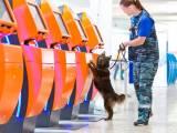 Собака Сулимова в работе