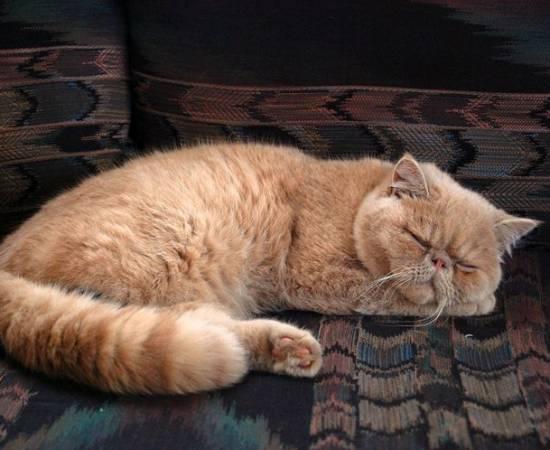 Лучшие антигельминтные препараты для котов