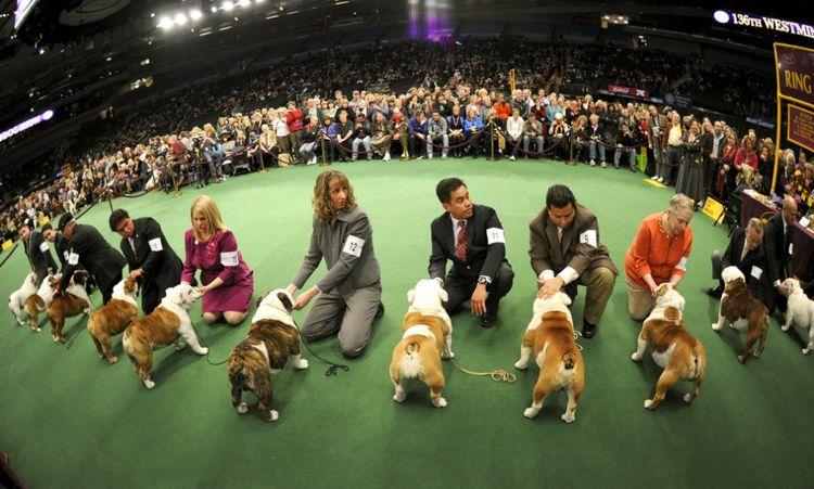 Чемпионат мира собак World Dog Show в 2019 году