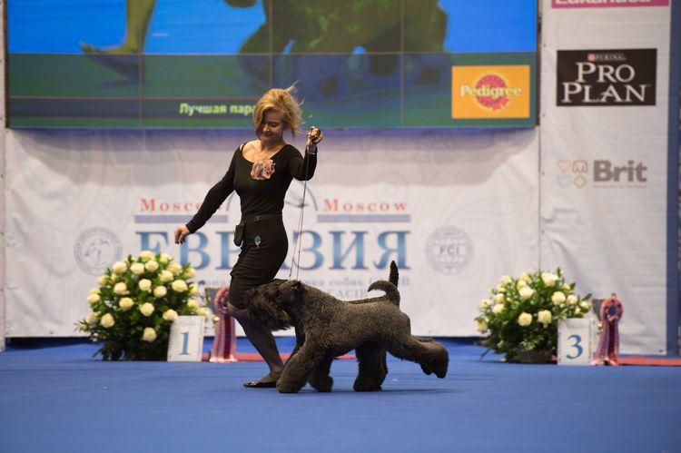 Выставка собак World Dog Show