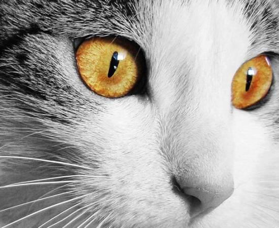 Кот с желтыми глазами