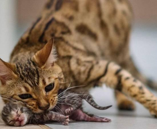 Кошка ест котенка