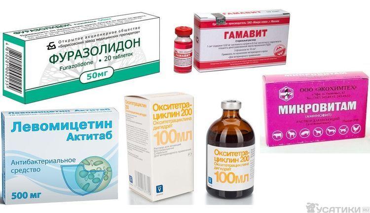 Препараты для лечения сальмонеллеза у кошек