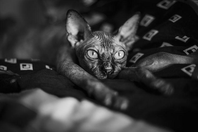 У кошки волочатся задние лапы