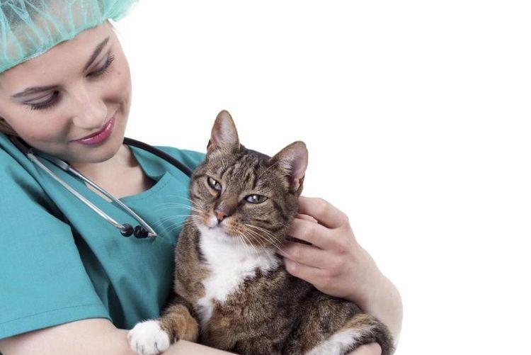 Кот на руках у ветеринара