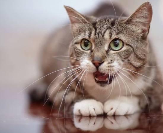 Кошка часто дышит