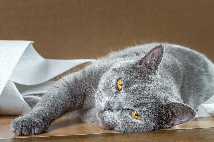 Кот грустный