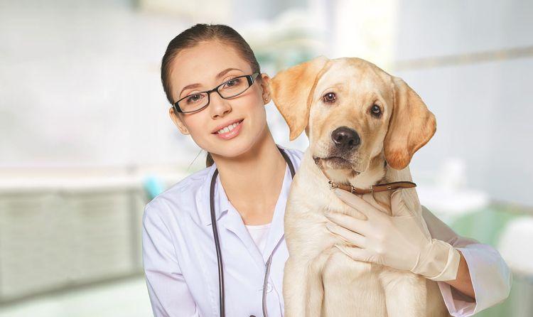 Обследование собаки ветеринаром