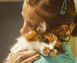 УЗИ сердца кошки