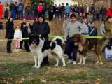выставка болгарских овчарок