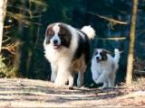 Торньяк и щенок