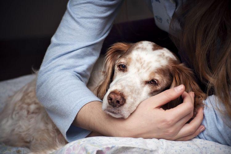 Собака сонливая и вялая